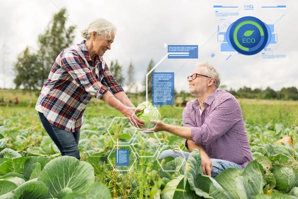 senior couple picking cabbage on farm Stock photo © dolgachov