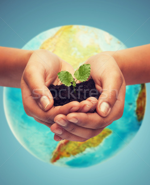 woman hand with green sprout over earth globe Stock photo © dolgachov