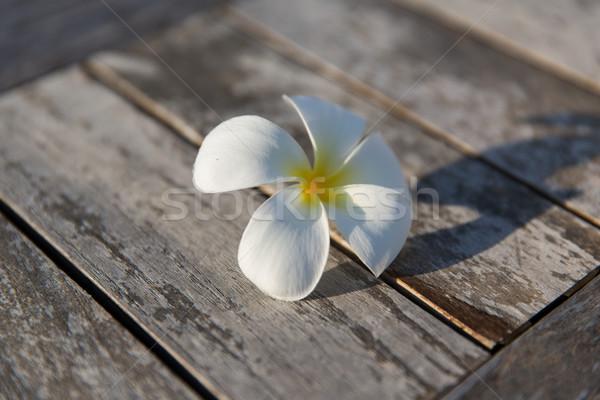 close up of white beautiful exotic flower on wood Stock photo © dolgachov
