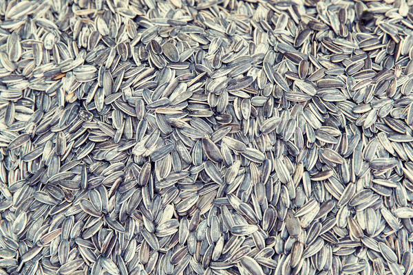 sunflower seeds texture Stock photo © dolgachov