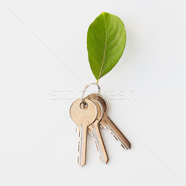 Casa teclas folha verde habitação ambiente Foto stock © dolgachov