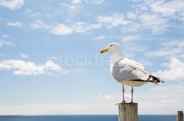 seagull over sea and blue sky Stock photo © dolgachov