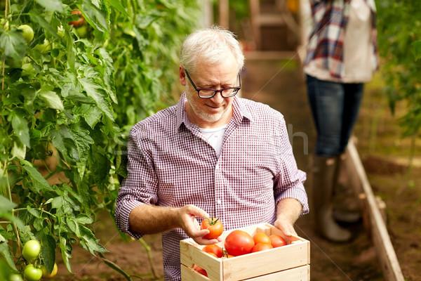 Viejo cuadro tomates granja invernadero Foto stock © dolgachov