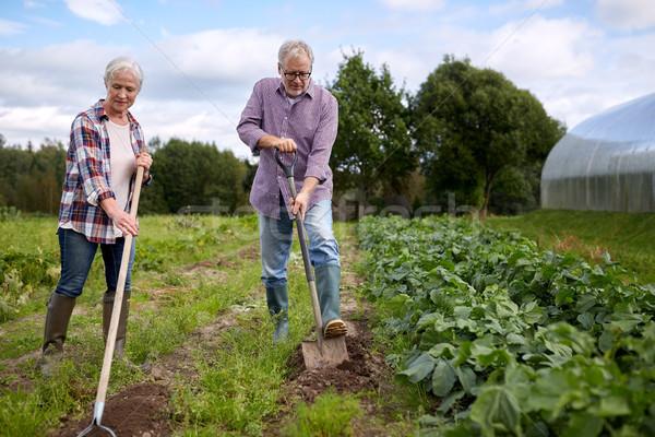 Starszy para ogród gospodarstwa ogrodnictwo rolnictwa Zdjęcia stock © dolgachov