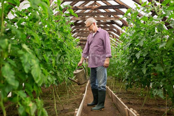 Kıdemli adam sulama çiftlik sera Stok fotoğraf © dolgachov