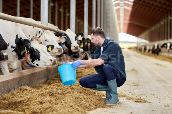 man with cows and bucket in cowshed on dairy farm Stock photo © dolgachov