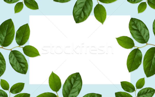 white blank space and green leaves on blue Stock photo © dolgachov