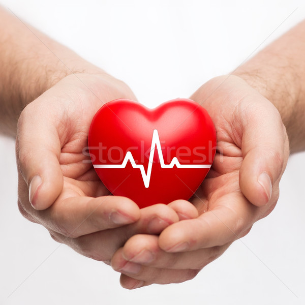 male hands holding heart with ecg line Stock photo © dolgachov