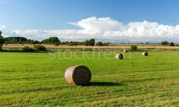 haystacks or hay rolls on summer field Stock photo © dolgachov