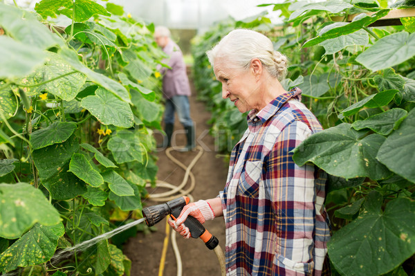 senior couple with garden hose at farm greenhouse Stock photo © dolgachov