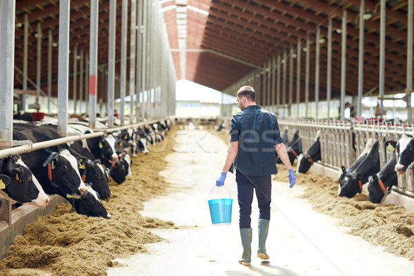man with bucket walking in cowshed on dairy farm Stock photo © dolgachov
