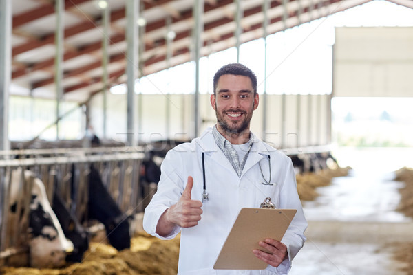 veterinarian with cows showing thumbs up on farm Stock photo © dolgachov