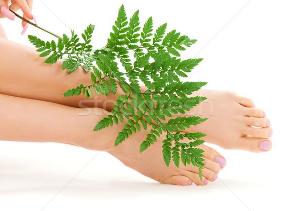 Női láb zöld levél kép zöld páfrány Stock fotó © dolgachov