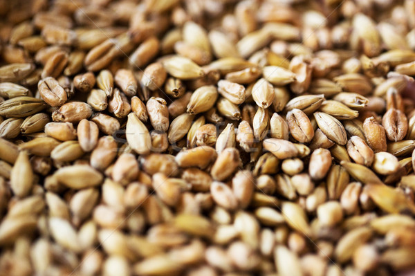 close up of malt or cereal grains Stock photo © dolgachov