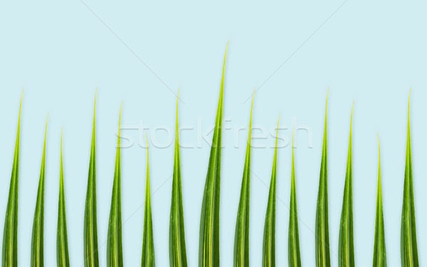 Zöld levelek fű kék természet organikus növénytan Stock fotó © dolgachov