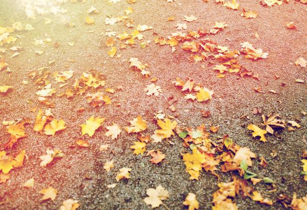 fallen autumn maple leaves on ground Stock photo © dolgachov