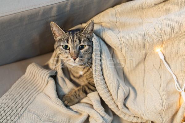 tabby cat lying on blanket at home in winter Stock photo © dolgachov