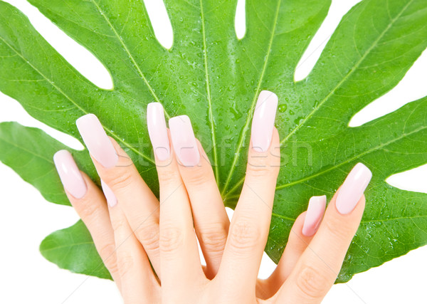 female hands with green leaf Stock photo © dolgachov