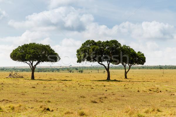 деревья саванна Африка природы пейзаж живая природа Сток-фото © dolgachov