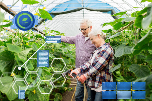 Stock photo: senior couple with garden hose at farm greenhouse