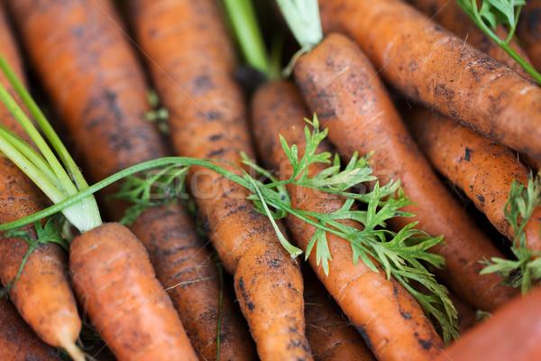 close up of carrot Stock photo © dolgachov