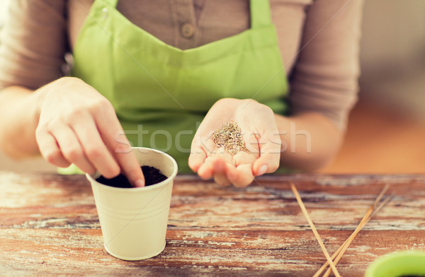 close up of woman sowing seeds to soil in pot Stock photo © dolgachov