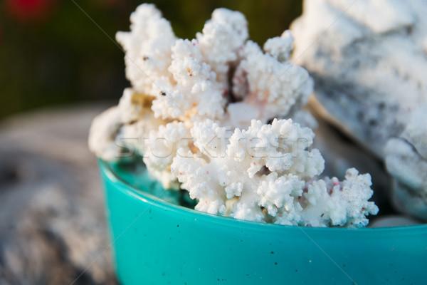 Korall tál gerinctelen vadvilág természet csésze Stock fotó © dolgachov