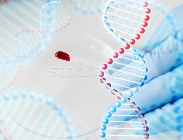 Wissenschaftler Blut Probe Labor Wissenschaft Stock foto © dolgachov