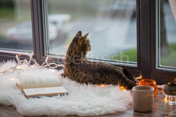tabby cat lying on window sill with book at home Stock photo © dolgachov