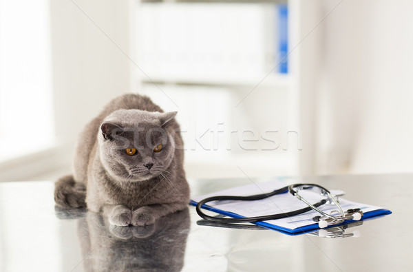 İngilizler kedi veteriner klinik tıp Stok fotoğraf © dolgachov