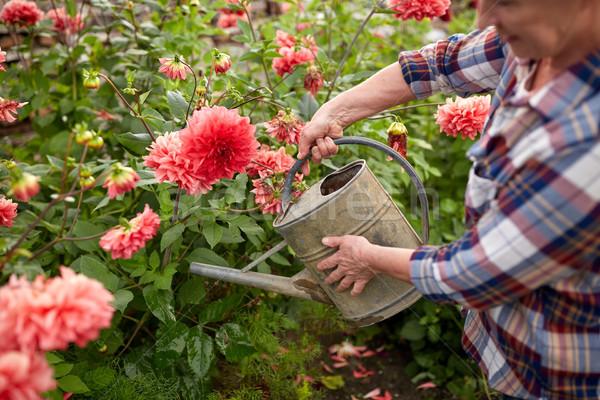 senior woman watering flowers at summer garden Stock photo © dolgachov
