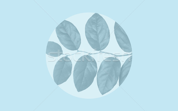 faded leaves over blue background Stock photo © dolgachov