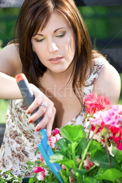 happy gardening Stock photo © dolgachov