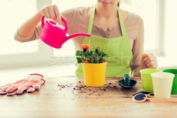 Kadın eller güller pot Stok fotoğraf © dolgachov