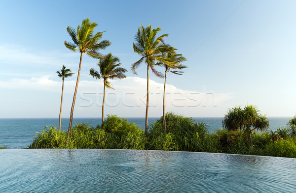 view from infinity edge pool to ocean and palms Stock photo © dolgachov