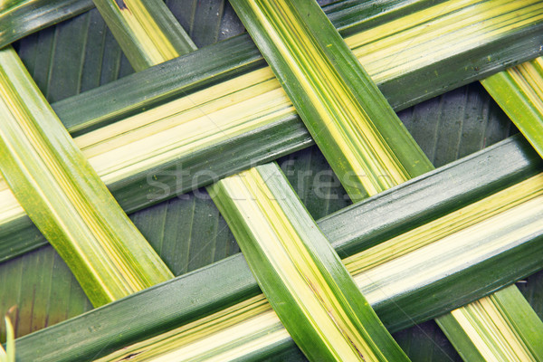 green palm tree leaf grid texture Stock photo © dolgachov