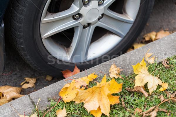 close up of car wheel and autumn leaves Stock photo © dolgachov