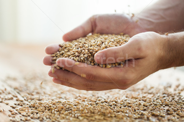 Stock photo: male farmers hands holding malt or cereal grains