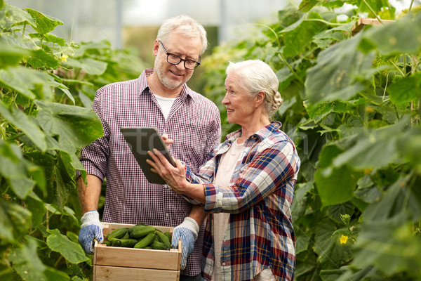 senior couple with cucumbers and tablet pc on farm Stock photo © dolgachov