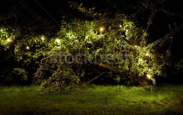 tree with garland lights at night summer garden Stock photo © dolgachov