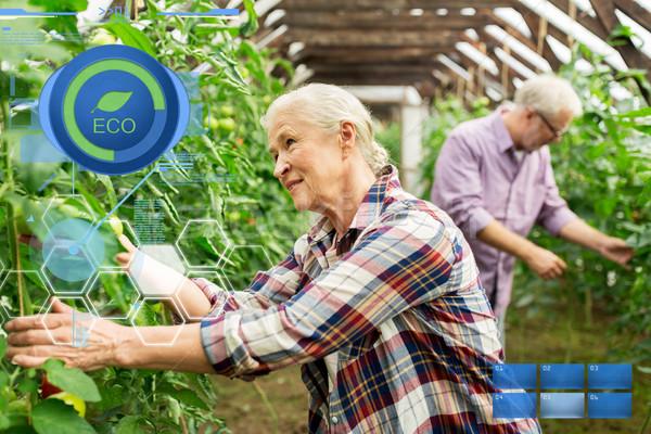 Stok fotoğraf: Yaşlı · kadın · domates · yukarı · çiftlik · sera