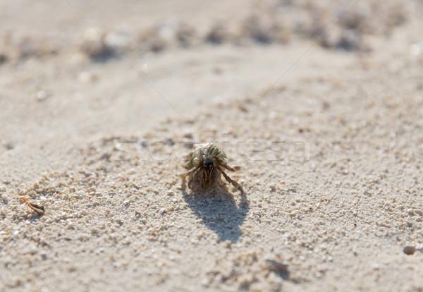 Rák kagyló tengerparti homok utazás turizmus vakáció Stock fotó © dolgachov