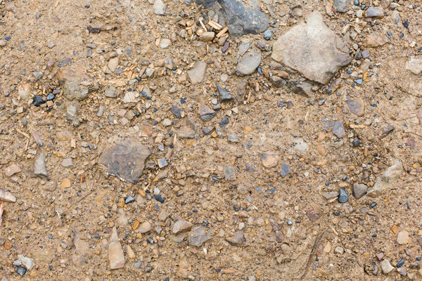 close up of brown ground Stock photo © dolgachov