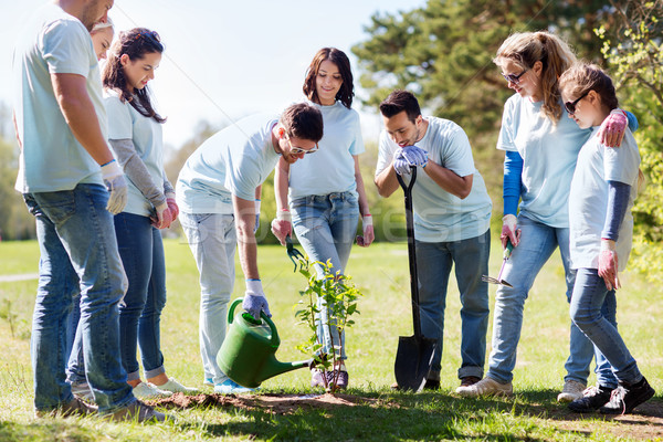 group of volunteers planting and watering tree Stock photo © dolgachov