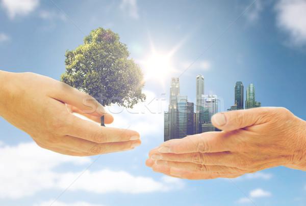 Ręce zielone dąb miasta budynków Zdjęcia stock © dolgachov