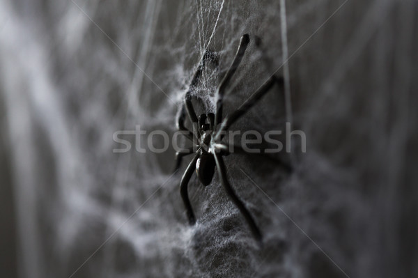 halloween decoration of black toy spider on cobweb Stock photo © dolgachov