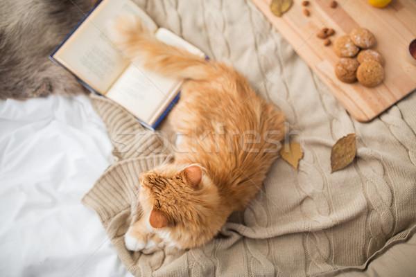 Rojo gato manta casa invierno mascotas Foto stock © dolgachov