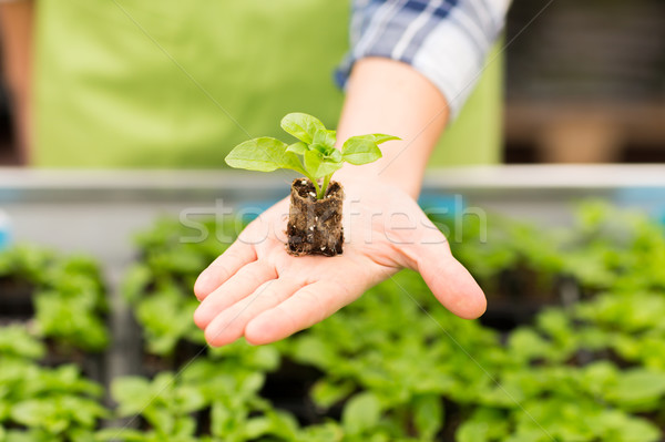 Stock photo: close up of woman hand holding seedling sprout