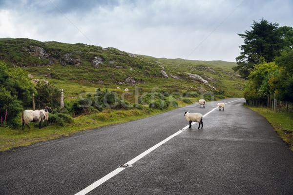 Stock fotó: Birka · út · Írország · utazás · vidék · aszfalt