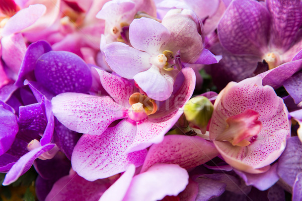 beautiful orchid flowers Stock photo © dolgachov